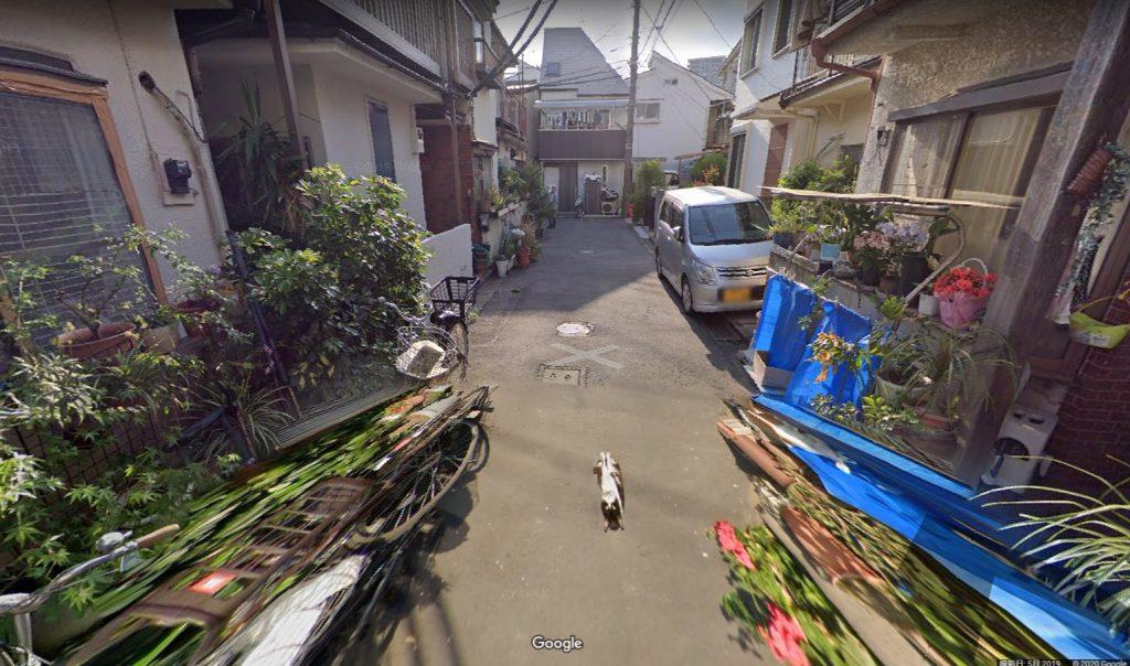 GoogleStreet View_猫
